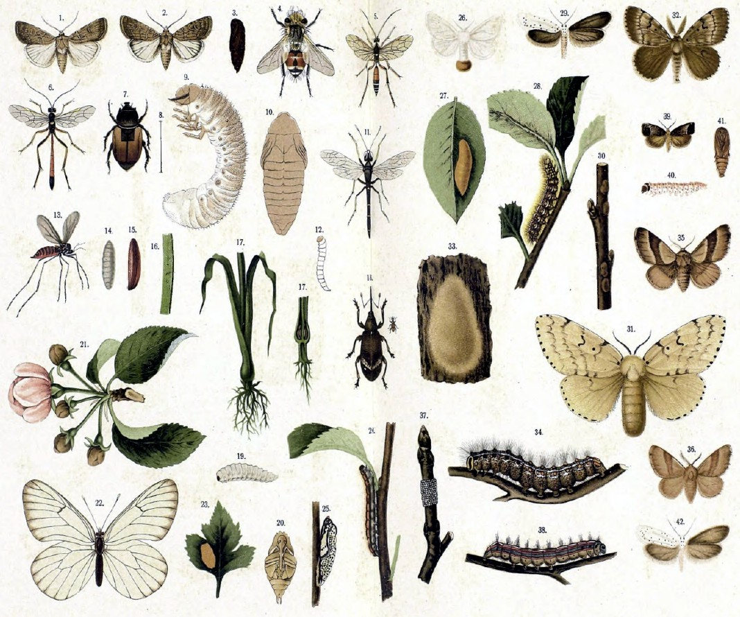 is fioricet harmful insects list